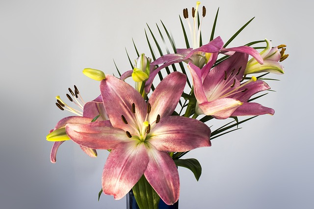 Lily, Lilium, Flower, Blossom, Bloom, Plant, Nature