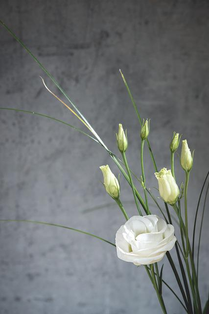 Lisianthus, Flower, Blossom, Bloom, White, White Flower