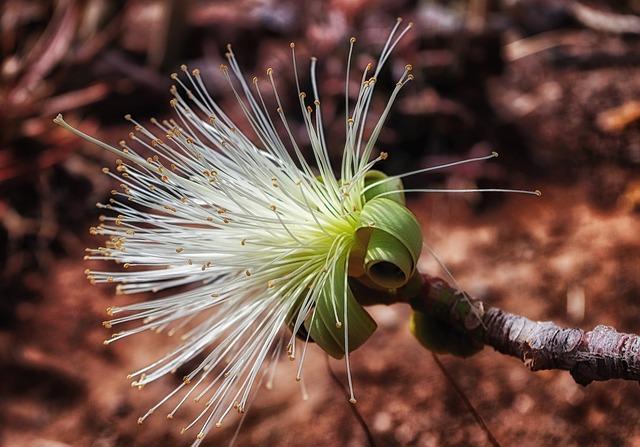 Estranges Pistils, Plant, Bloom, Close-up, Macro