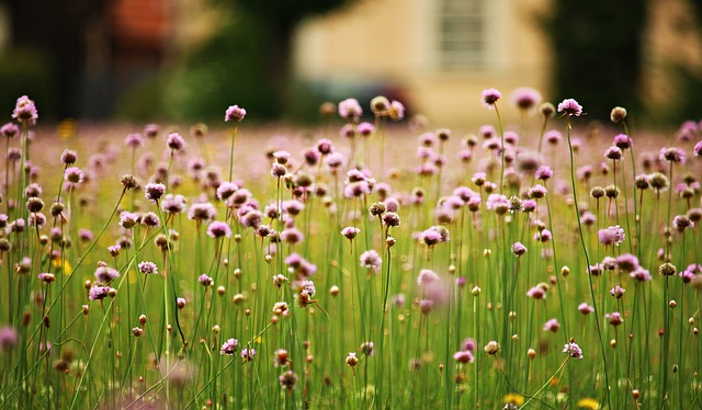 Flowers, Meadow, Plant, Bloom, Summer Meadow
