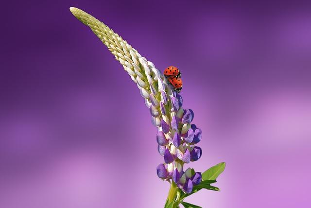 Ladybug, Flower, Blossom, Bloom, Spring, Nature, Plant