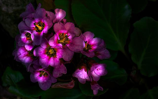 Stone Garden, Blossom, Bloom, Nature, Plant, Close