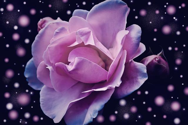 Rose, Flower, Pink, Blossom, Bloom, Fantasy