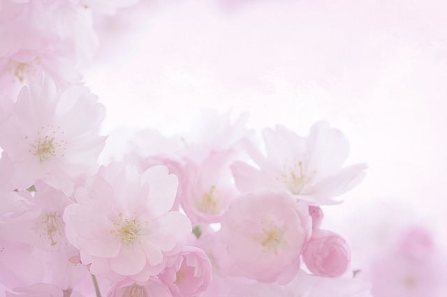 Pink, Blossom, Bloom, Spring, Romantic, Summer, Close