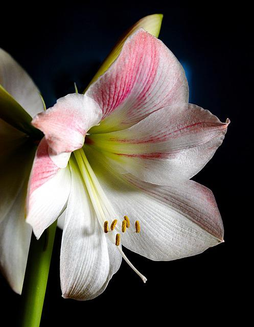 Orchid, Plant, Flower, Nature, Blossom, Bloom, White