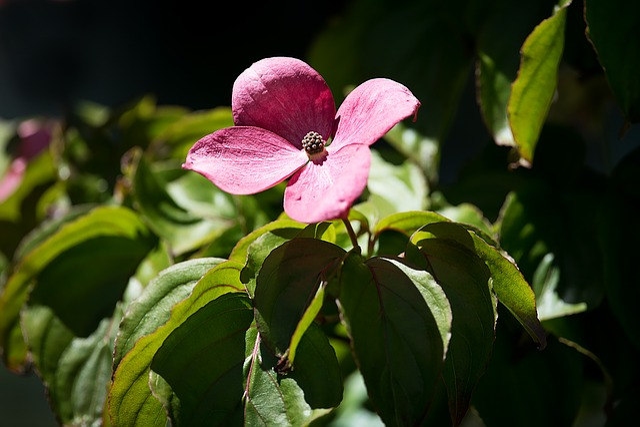 Blossom, Bloom, Pink, Pink Flower, Blossom, Plant