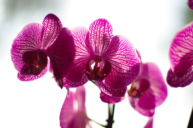 Arndt, Torick, Orchid, Flower, Purple, Blossom, Bloom