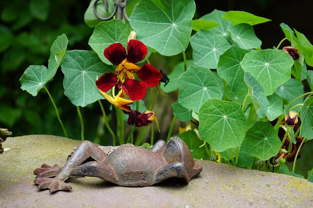 Frog, Summer, Nasturtium, Blossom, Bloom, Red