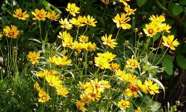 Summer Flowers, Home Garden, Shrub, Blossom, Bloom