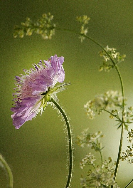 Flower, Herbs, Meadow, Grass, Spring, Summer, Bloom