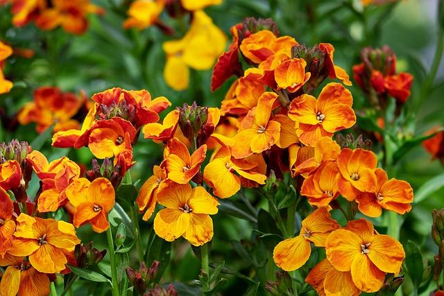 Lobelia, Fakel Lobelia, Flower, Bloom, Strong