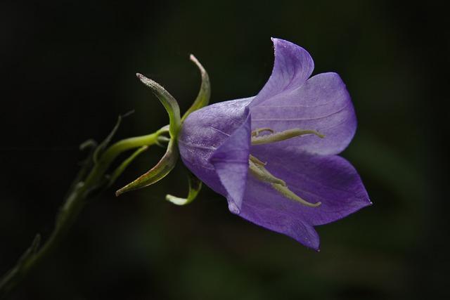 Blossom, Bloom, Violet, Spring