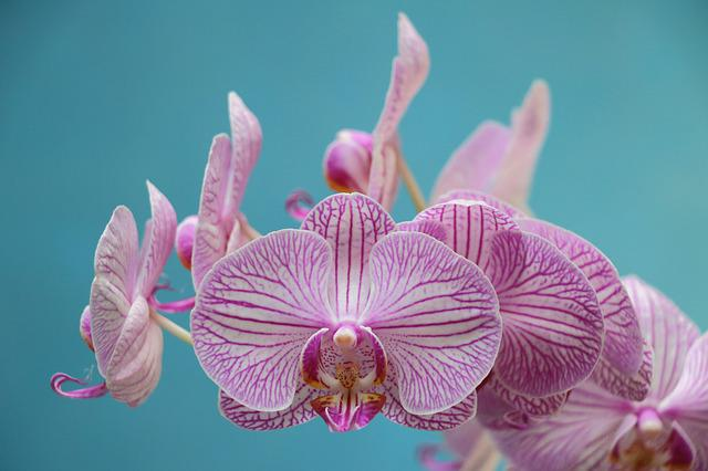 Orchid, Purple, Flower, Bloom, Violet
