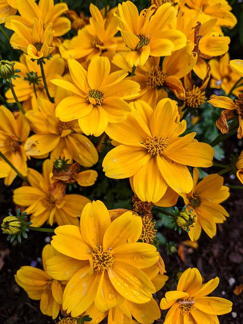 Yellow Flowers, Yellow, Flowers, Nature, Spring, Bloom