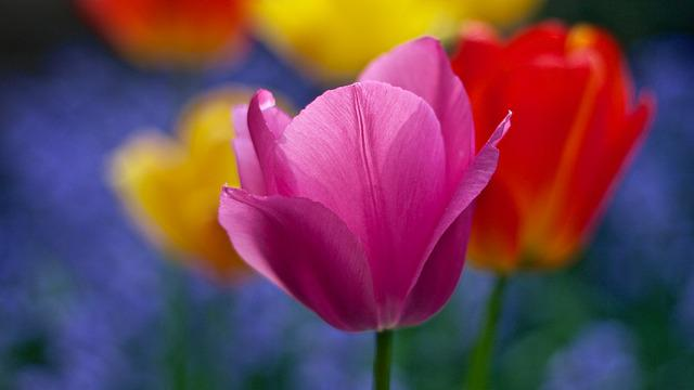 Bloom, Blooming, Blossom, Blur, Bright, Bulb, Colorful