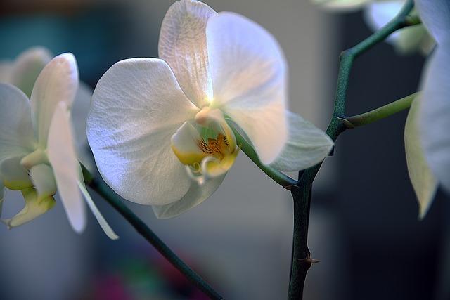 Flower, Nature, Flora, Garden, Blooming, Beautiful