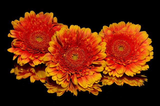 Flowers, Orange, Blossoms, Blooming, Yellow, Isolated