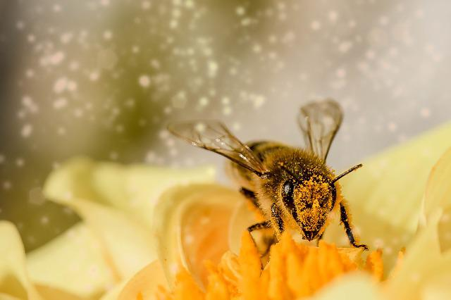 Hover Fly, Insect, Animal, Fly, Mist Bee, Blossom