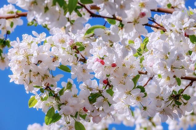 Blossom, Embellishment, Branch, Apple Blossom
