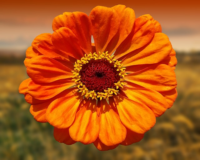 Flower, Orange, Nature, Beautiful, Blossom, Bloom