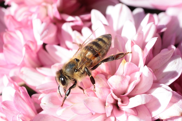 Bee, Macro, Flower, Blossom, Bloom, Insect, Plant