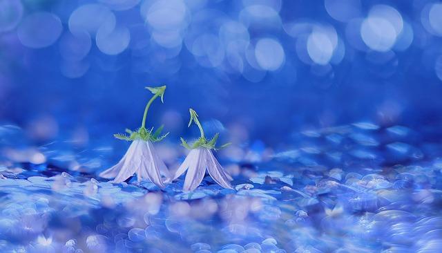 Bellflower, Flowers, Blossom, Bloom, Petite Bellflower