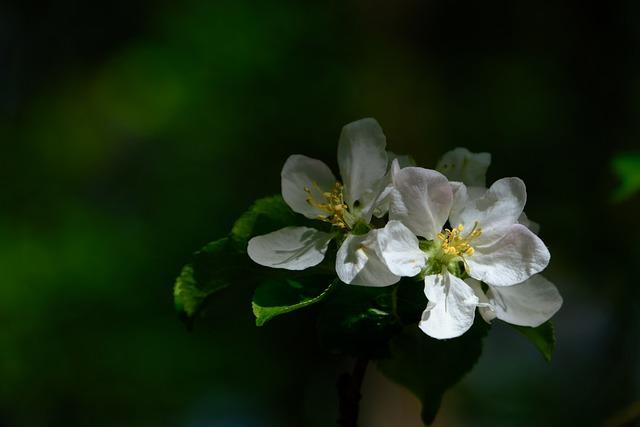 Blossom, Bloom, White, Blossom, Bloom, Branch