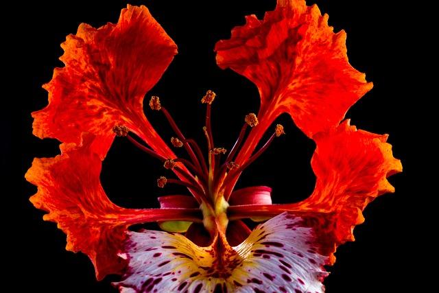 Blossom, Blossom, Bloom, Red