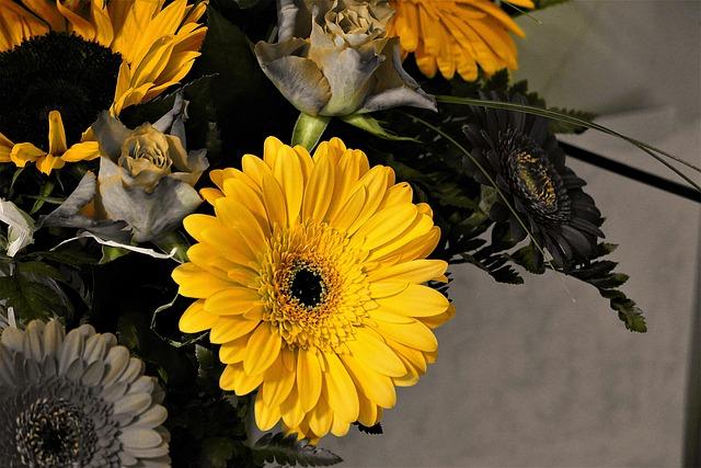 Gerbera, Yellow, Blossom, Bloom, Flower, Plant