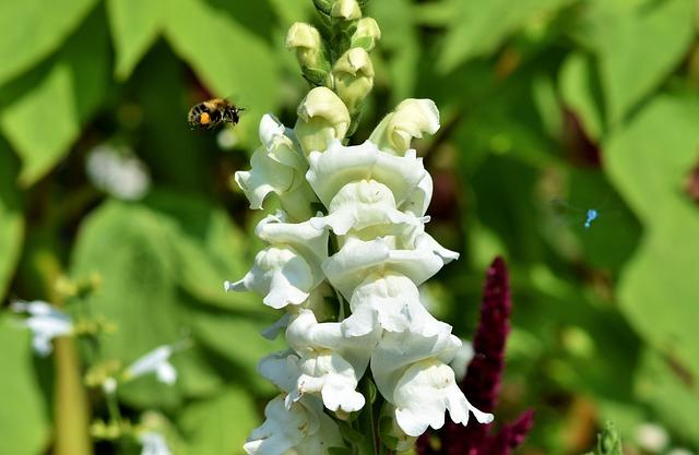 Loewenmaeulchen, Snapdragon, Flower, Blossom, Bloom