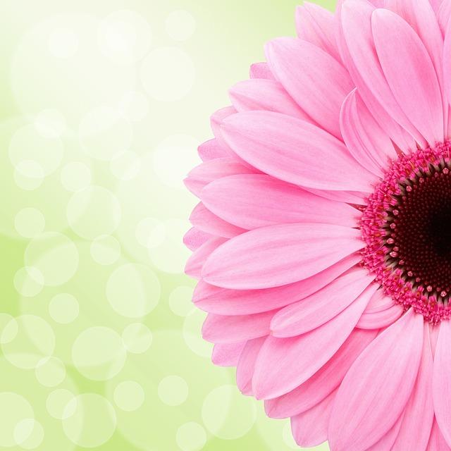 Gerbera, Flower, Blossom, Bloom, Pink, Wellness, Design