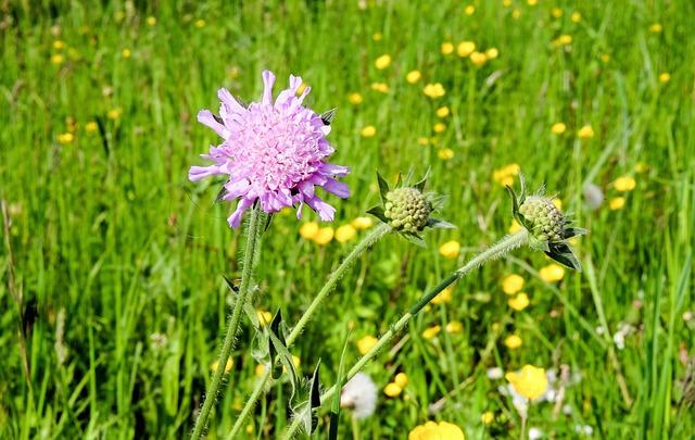 Plant, Blossom, Bloom, Flowers, Purple, Pointed Flower