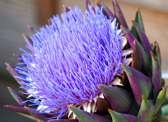 Artichokes, Blossom, Bloom, Vegetables, Plant, Purple