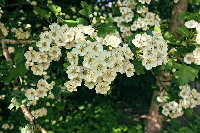 Flower, Tree, Branch, Flowering Tree, Blossom, Spring