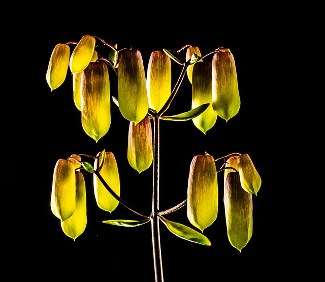Crassulaceae, Yellow, Blossom, Bloom, Bright