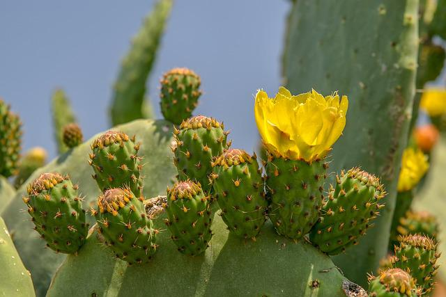 Cactus, Juice Plant, Thorn, Plant, Barbed, Blossom