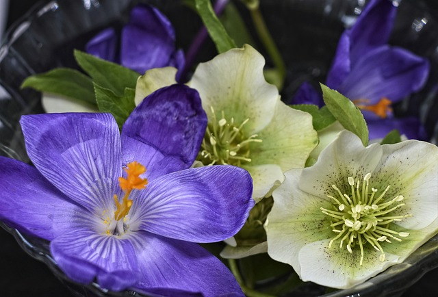 Christmas Rose, Anemone Blanda, Flower, Blossom, Bloom