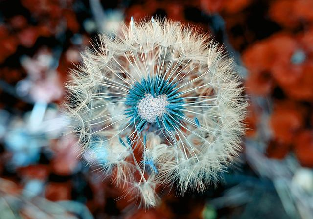 Dandelion, Plant, Close Up, Macro, Nature, Blossom