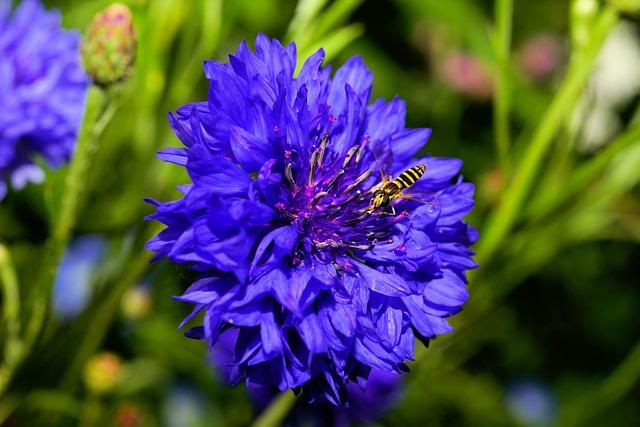 Blossom, Bloom, Flower, Cornflower, Blue, Nature, Plant