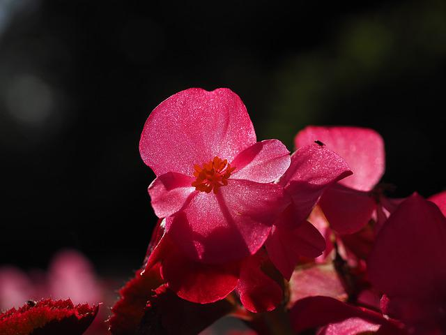 Blossom, Bloom, Close Up, Backlighting, Detail