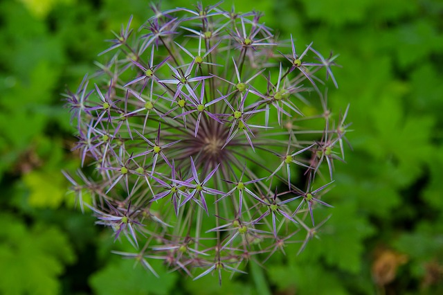 Flowers, Blossom, Bloom, Filigree
