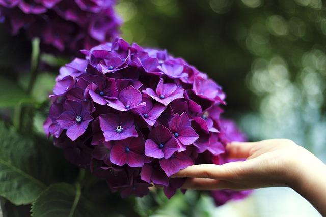 Bloom, Depth Of Field, Blossom, Close-up, Flora