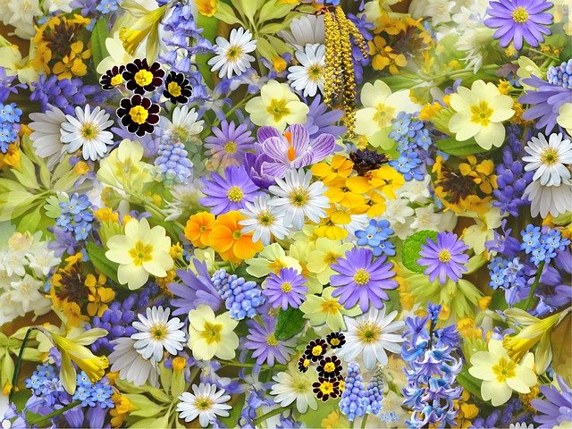 Spring Flowers, Flowers, Collage, Floral, Blossom