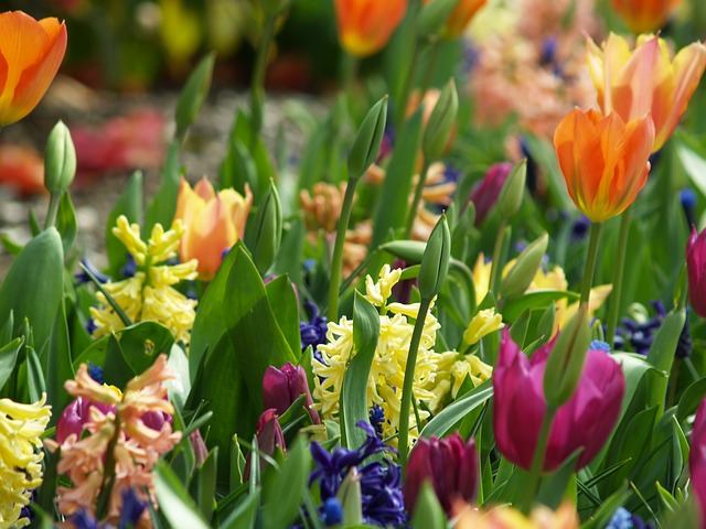 Flowers, Spring, Tulip, Nature, Floral, Blossom, Green