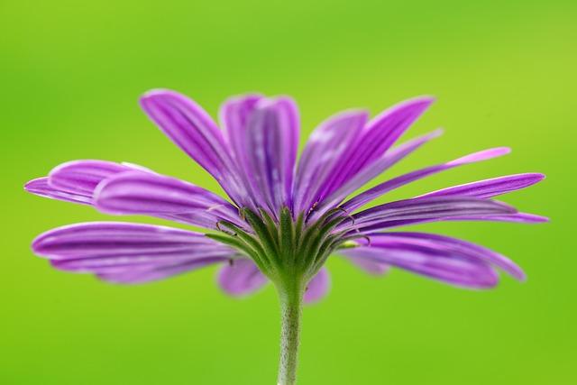 Flower, Blossom, Bloom, Violet, Pink, Pink-purple