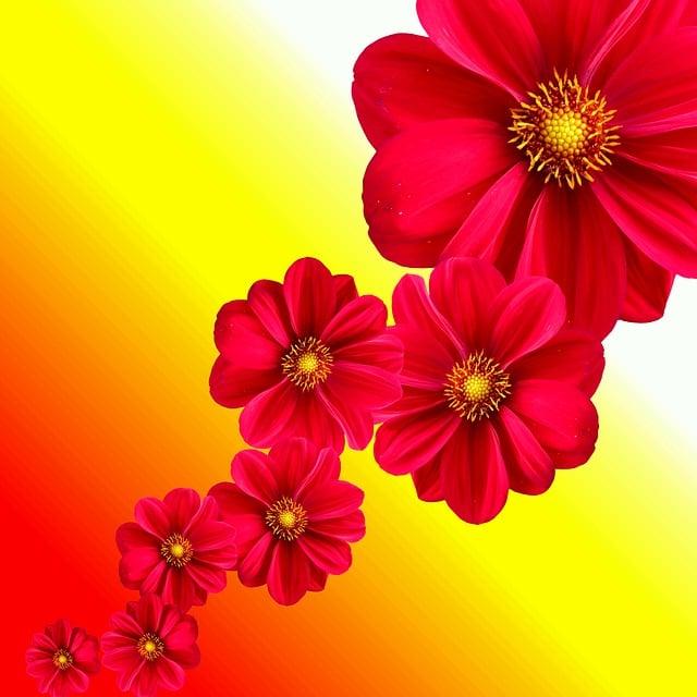 Dahlia, Plant, Flower, Blossom, Bloom, Nature, Garden