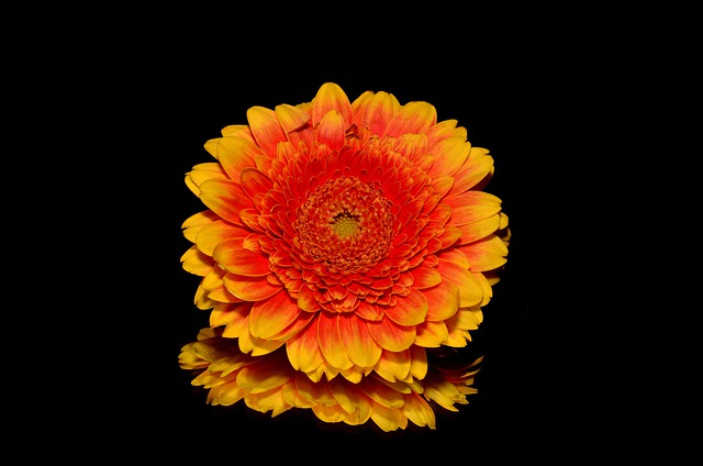 Flower, Orange, Blossom, Blooming, Yellow, Isolated