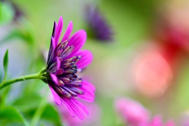 Flower, Blossom, Bloom, Flower Power, Beauty