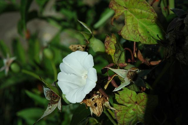 Flower, Blossom, Bloom, Summer, Nature, Plant, White