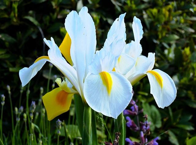 Orchid, Flower, Blossom, Bloom, White Blossom, Plant